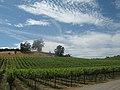 Vineyards in Russian River, Sonoma.jpg