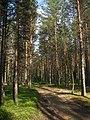 Vozhegodskiy r-n, Vologodskaya oblast' Russia - panoramio - Сергей Зубов (62).jpg