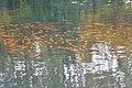 Wade Lagoon Koi Fish (21938786314).jpg