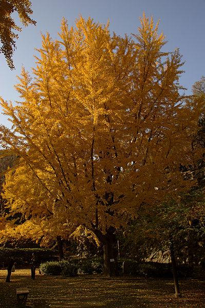 ファイル:Wakayama Park05n4592.jpg