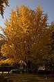 Wakayama Park05n4592.jpg