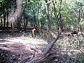 Walayar Deer Park - panoramio.jpg
