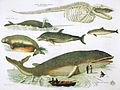 Wale 1850 01.jpg