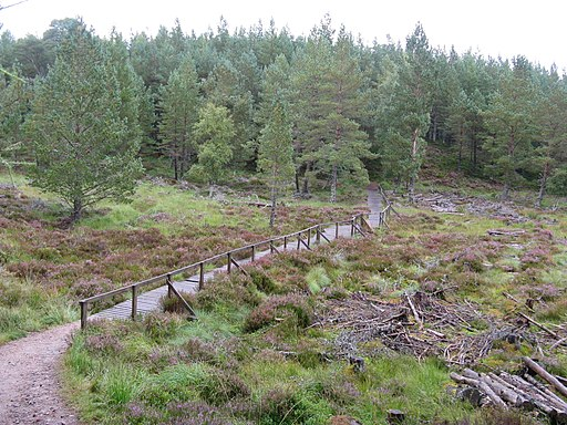 Walkway on path to the Linn of Dee car park - geograph.org.uk - 2084083