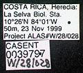 Wasmannia auropunctata casent0039797 label 1.jpg