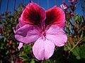 Water Drop Flower.jpg