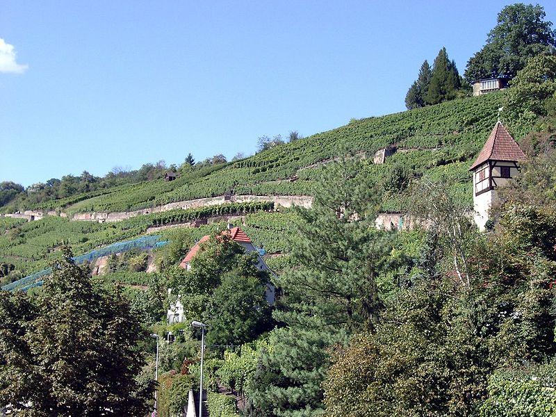 File:Weinberge Esslingen (unterer Neckarhaldenweg).jpg