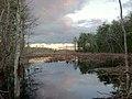 Wetland at Assabet National Wildlife Refuge. (15685924656).jpg