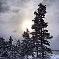 White Christmas (11547909584).jpg