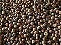 Wild beans z01.jpg