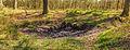 Wilde zwijnen (Sus scrofa) zoel. Locatie, Kroondomein 02.jpg