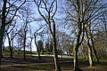 Winter trees - geograph.org.uk - 713339.jpg