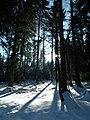 Wintersonne zwischen den Bäumen.JPG