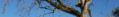 Wiregrass Alabama banner Hepperle Manor pecan tree in Geneva.png