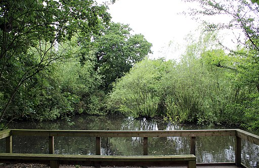 Wirral Country Park, Lees Lane 3
