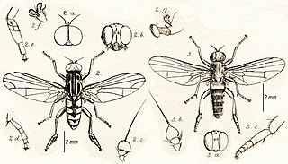 the flat footed flies ch andler p j