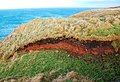 Wobbly Horizons - geograph.org.uk - 1116809.jpg