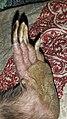 Wombat foot.jpg