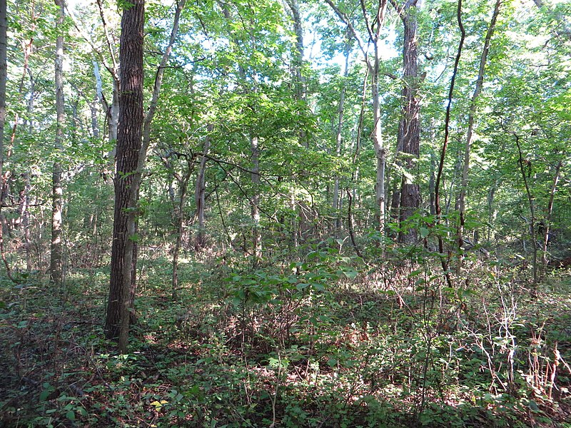 File:Woodland Nature Trail, Point Pelee National Park, Leamington, Ontario, Canada (21152575053).jpg