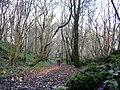 Woodland footpath - geograph.org.uk - 1589946.jpg