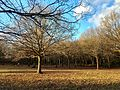 Woodlands north of Monken Hadley Common bridle path 04.jpg