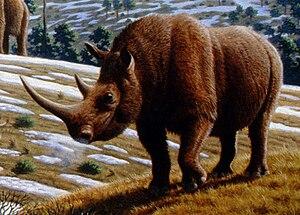 Шерстистый носорог (реконструкция)