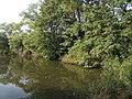 Xaverovský rybník I, břeh II.jpg