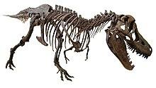 Scheletro di tarbosauro, un teropode.