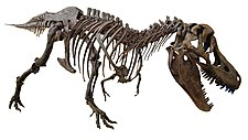 Yamanashigakuin elementary school Tarbosaurus white background.JPG