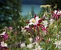 Yoho National Park (1954884184).jpg