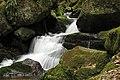 Ysperklamm 2011-05 04 NÖ-Naturdenkmal ME-028.jpg