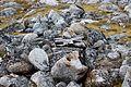 Ytre Norskoya, Svalbard, Arctic (20291359211).jpg