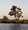 Zicht vanaf het water op de Alde Feanen van het It Fryske Gea. Waardevol natuurgebied in Friesland 3.jpg