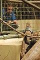 Zoo ZH DSC 6744 (2917290105).jpg