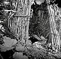 """""""Lajb?n"""" iz siršča (notranjost), Breg 1953.jpg"""
