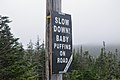 """""""Slow Down! Baby Puffins on Road. Be Aware"""" - Witless Bay, Newfoundland 2019-08-09.jpg"""