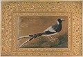 """Spotted Forktail"", Folio from the Shah Jahan Album MET DP246534.jpg"