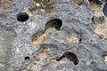 """Swiss cheese limestone"" (Pain Pond, San Salvador Island, Bahamas) 8 (16135572758).jpg"