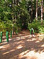 (PL) Polska - Warmia - Ścieżka nad jeziorem Długim w Lesie Miejskim w Olsztynie - Path on the Long Lake in the City Forest in Olsztyn (9.X.2012) - panoramio (17).jpg