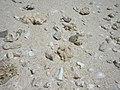 @Tumon beach (161425571).jpg