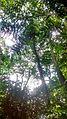 Árvore refletindo luz solar no Núcleo da Pedra Grande.jpg