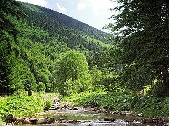 Moravian-Silesian Beskids - Čeladenka River in Moravian-Silesian Beskids