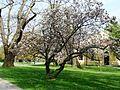 Łańcut, park E.JPG