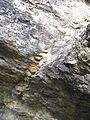 Аркозові пісковики 29.jpg