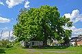 Багатовіковий дуб (Прилуки), вул. Гірняка, 11 01.jpg