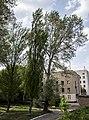 Група вікових дерев тополі білої 08.jpg