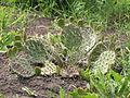 Донецкий ботанический сад 028.jpg