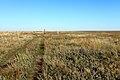 Заброшенный просёлок в паре шагов от границы с Казахстаном - panoramio.jpg