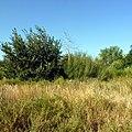 Каргалинский район Актюбинской области Казахстана - panoramio.jpg