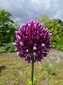 Квітка влітку. Ботанічний сад.jpg